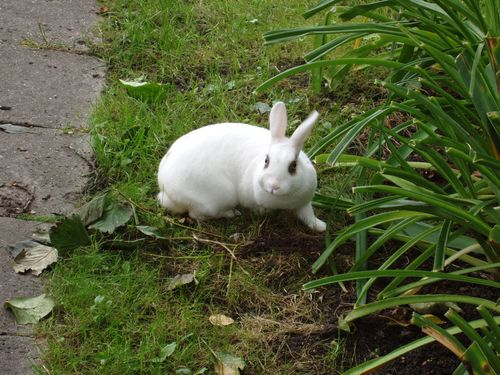 Attack bunny